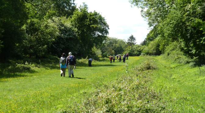 Saturday 30 May: Circular walk in Hatfield Forest