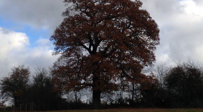 Saturday 3rd December; Brookmans Park to Wildhill (Herts) circular