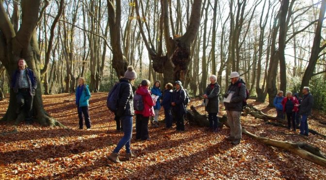18th November.  Epping Forest and Forest Bathing