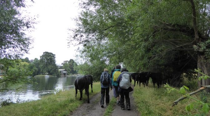 Saturday 27th July. Cookham to Maidenhead