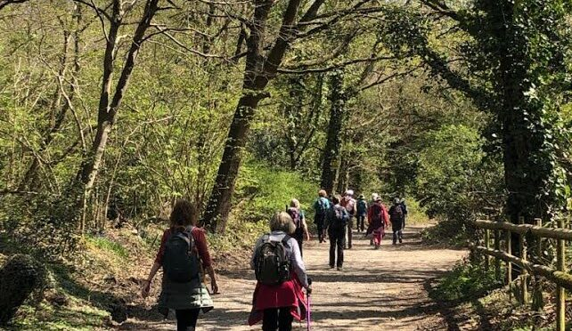 SUNDAY 16 MAY: NORTHWOOD AND RUISLIP WOODS (LINEAR)