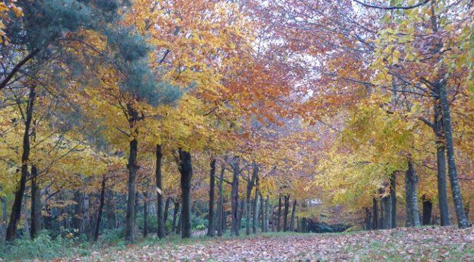 Saturday 18th November, Boxhill to Dorking