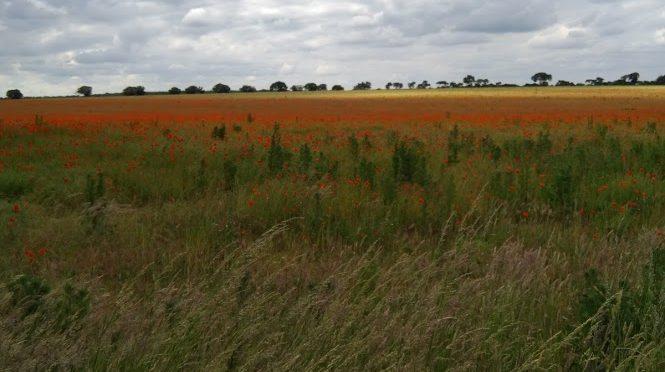 Icknield Way stage 8 – Icklingham to Knettishall Heath