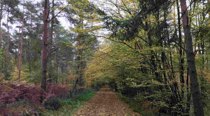 Saturday 24 October 2020: Bayford Circular Walk (Hertfordshire)